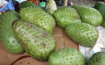 Guanabana ou corossol (Costa Rica - Puerto Limon)