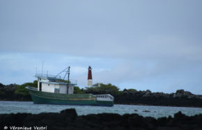 Ile Isabella (Equateur - Galapagos)