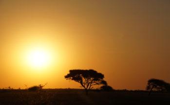 Kalahari, coucher de soleil (Botswana)