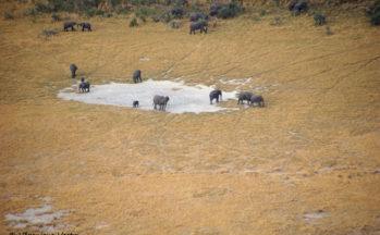 Delta de l'Okavango, survol - Eléphants (Botswana)