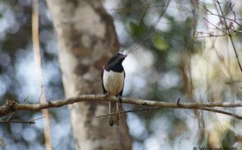 Ankaranfantsika - Dyal malgache (Madagascar)