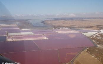 Marais salant, à proximité de Swakopmund (Namibie)